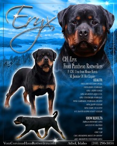 Multi CH Eryx From Pantheon Rottweilers