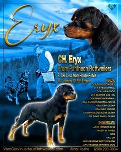 Ch Eryx From Pantheon Rottweilers (Eryx)