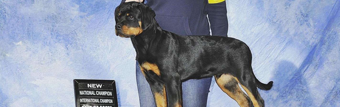 Eryx winning National puppy Champion, International Puppy Champion and Honors Puppy Chamion
